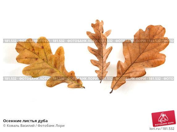 Осенние листья дуба, фото № 181532, снято 18 октября 2006 г. (c) Коваль Василий / Фотобанк Лори