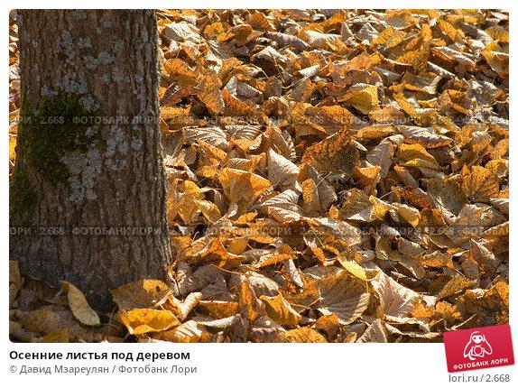 Осенние листья под деревом, фото № 2668, снято 3 октября 2005 г. (c) Давид Мзареулян / Фотобанк Лори