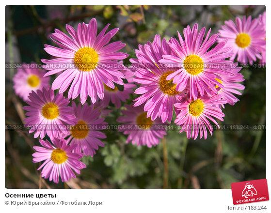 Осенние цветы, фото № 183244, снято 13 октября 2007 г. (c) Юрий Брыкайло / Фотобанк Лори