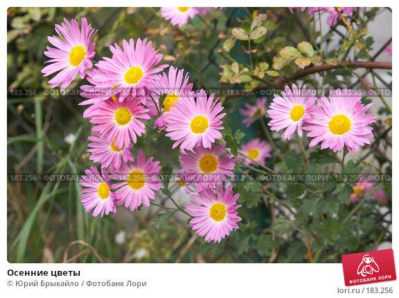 Осенние цветы, фото № 183256, снято 13 октября 2007 г. (c) Юрий Брыкайло / Фотобанк Лори