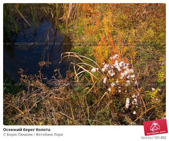 Осенний берег болота, фото № 101892, снято 29 сентября 2006 г. (c) Борис Панасюк / Фотобанк Лори