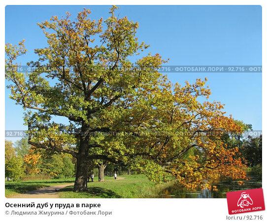 Осенний дуб у пруда в парке, фото № 92716, снято 11 декабря 2016 г. (c) Людмила Жмурина / Фотобанк Лори