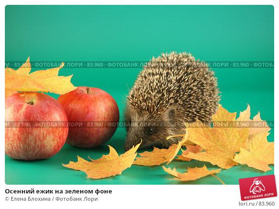 Осенний ежик на зеленом фоне, фото № 83960, снято 12 сентября 2007 г. (c) Елена Блохина / Фотобанк Лори