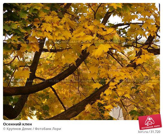 Купить «Осенний клен», фото № 31720, снято 7 октября 2006 г. (c) Крупнов Денис / Фотобанк Лори