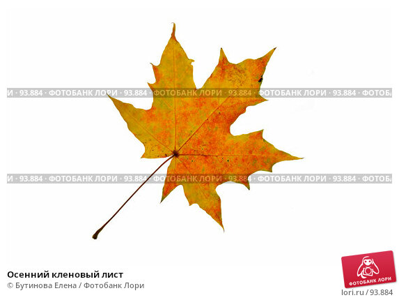 Осенний кленовый лист, фото № 93884, снято 6 октября 2007 г. (c) Бутинова Елена / Фотобанк Лори