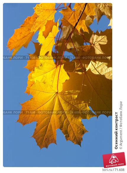 Осенний контраст, фото № 71608, снято 24 сентября 2006 г. (c) Argument / Фотобанк Лори