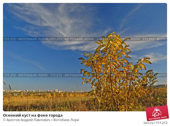 Осенний куст на фоне города, фото № 111212, снято 20 октября 2007 г. (c) Арестов Андрей Павлович / Фотобанк Лори