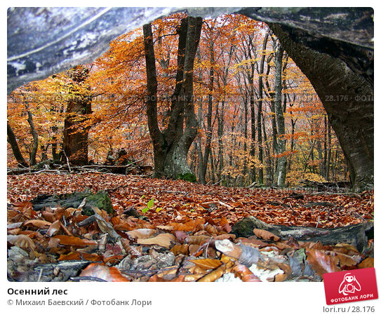 Осенний лес, фото № 28176, снято 28 октября 2006 г. (c) Михаил Баевский / Фотобанк Лори