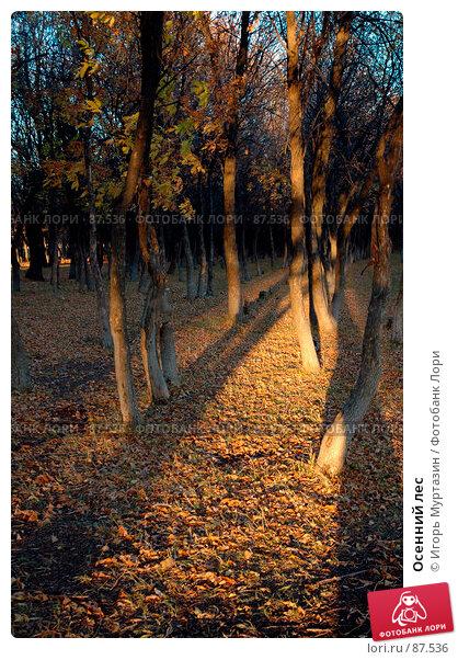 Осенний лес, фото № 87536, снято 1 января 2004 г. (c) Игорь Муртазин / Фотобанк Лори