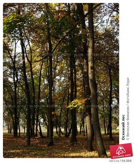 Осенний лес, фото № 94884, снято 28 сентября 2007 г. (c) Вячеслав Финагин / Фотобанк Лори
