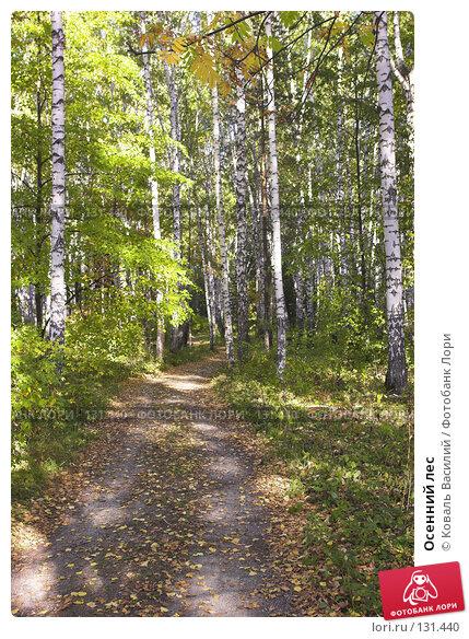 Осенний лес, фото № 131440, снято 22 января 2017 г. (c) Коваль Василий / Фотобанк Лори