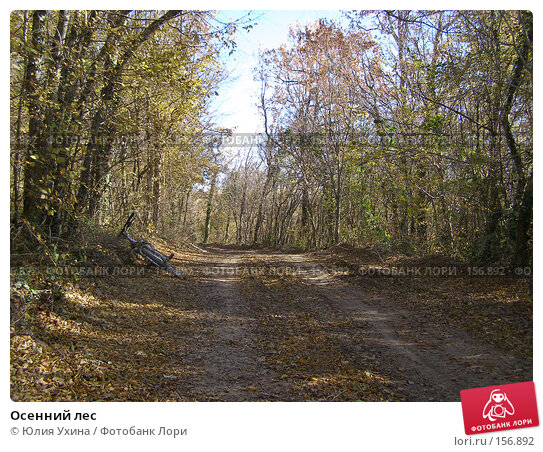 Осенний лес, фото № 156892, снято 25 ноября 2007 г. (c) Юлия Ухина / Фотобанк Лори
