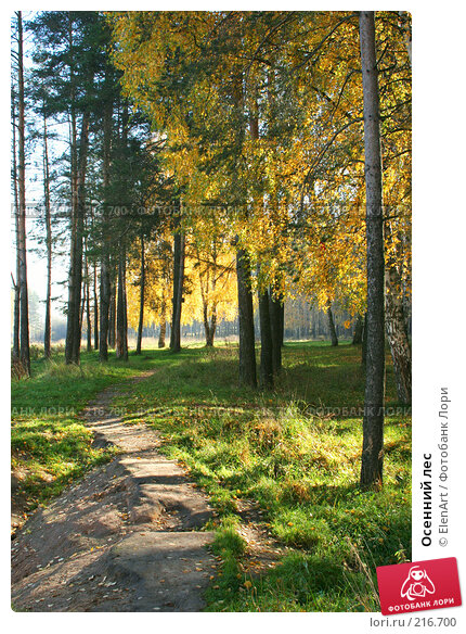 Осенний лес, фото № 216700, снято 20 сентября 2017 г. (c) ElenArt / Фотобанк Лори