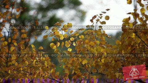 Купить «Осенний лес», видеоролик № 5823172, снято 5 января 2012 г. (c) Виталий Зверев / Фотобанк Лори