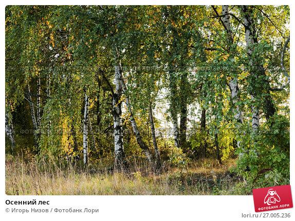 Купить «Осенний лес», эксклюзивное фото № 27005236, снято 11 сентября 2017 г. (c) Игорь Низов / Фотобанк Лори