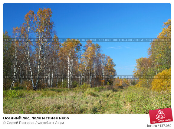 Осенний лес, поле и синее небо, фото № 137080, снято 29 сентября 2007 г. (c) Сергей Пестерев / Фотобанк Лори