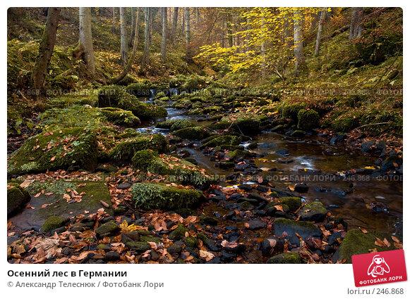 Осенний лес в Германии, фото № 246868, снято 31 октября 2007 г. (c) Александр Телеснюк / Фотобанк Лори