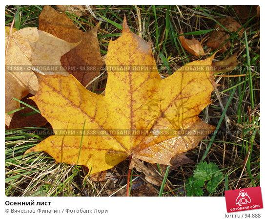 Осенний лист, фото № 94888, снято 28 сентября 2007 г. (c) Вячеслав Финагин / Фотобанк Лори