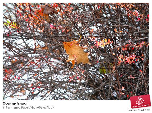 Осенний лист, фото № 144132, снято 13 ноября 2007 г. (c) Parmenov Pavel / Фотобанк Лори