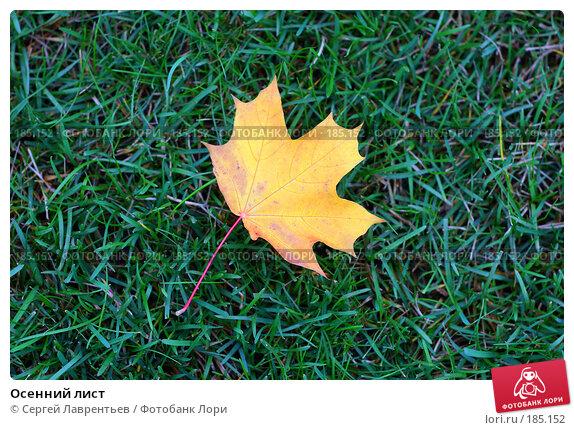 Купить «Осенний лист», фото № 185152, снято 20 сентября 2007 г. (c) Сергей Лаврентьев / Фотобанк Лори