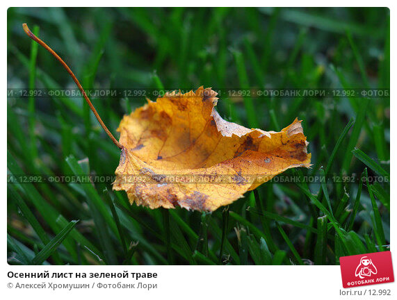 Осенний лист на зеленой траве, фото № 12992, снято 22 января 2017 г. (c) Алексей Хромушин / Фотобанк Лори