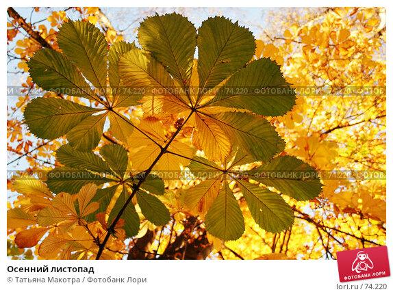 Осенний листопад, фото № 74220, снято 21 октября 2005 г. (c) Татьяна Макотра / Фотобанк Лори