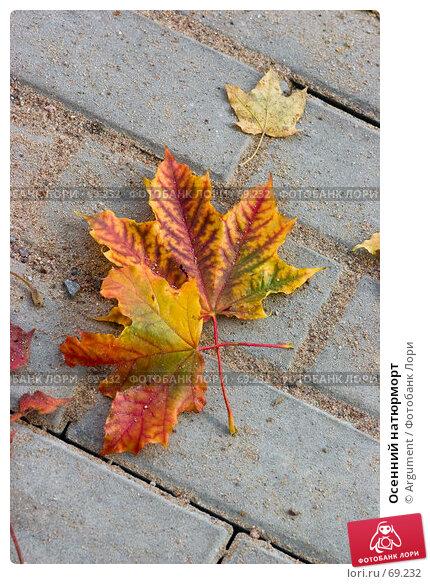Осенний натюрморт, фото № 69232, снято 28 сентября 2006 г. (c) Argument / Фотобанк Лори