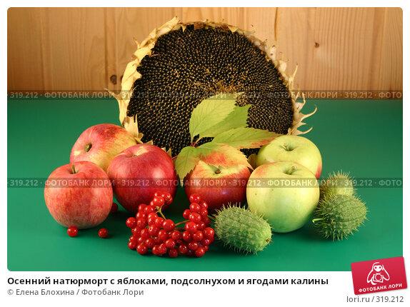 Купить «Осенний натюрморт с яблоками, подсолнухом и ягодами калины», фото № 319212, снято 4 сентября 2007 г. (c) Елена Блохина / Фотобанк Лори