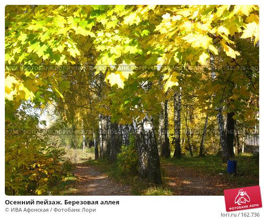 Осенний пейзаж. Березовая аллея, фото № 162736, снято 8 октября 2006 г. (c) ИВА Афонская / Фотобанк Лори