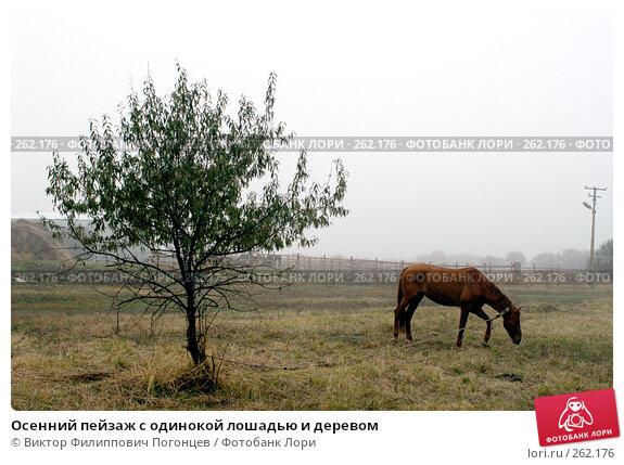 Осенний пейзаж с одинокой лошадью и деревом, фото № 262176, снято 28 октября 2004 г. (c) Виктор Филиппович Погонцев / Фотобанк Лори
