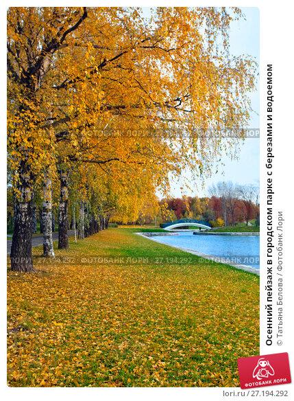 Купить «Осенний пейзаж в городском парке с березами и водоемом», фото № 27194292, снято 17 октября 2017 г. (c) Татьяна Белова / Фотобанк Лори