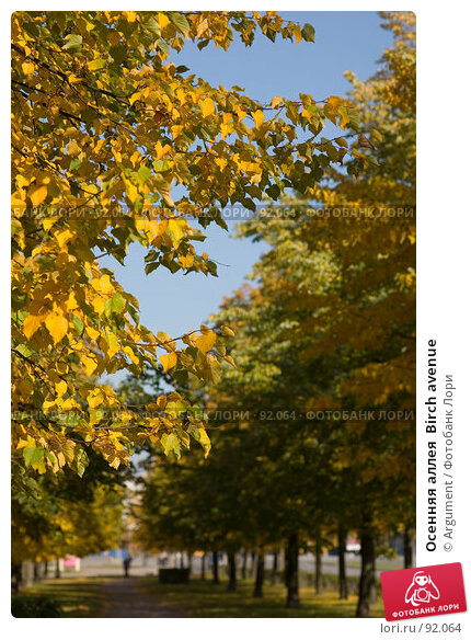 Осенняя аллея  Birch avenue, фото № 92064, снято 25 сентября 2007 г. (c) Argument / Фотобанк Лори