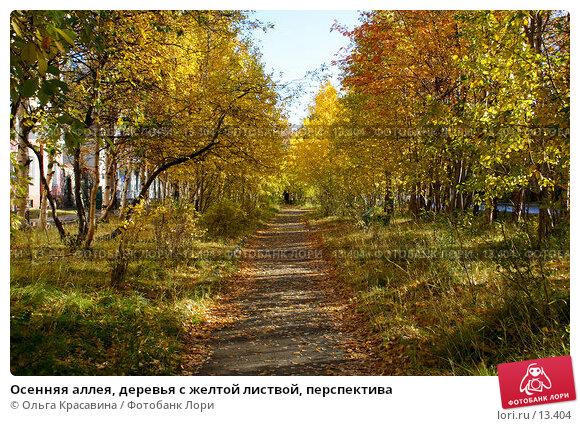 Осенняя аллея, деревья с желтой листвой, перспектива, фото № 13404, снято 21 сентября 2006 г. (c) Ольга Красавина / Фотобанк Лори