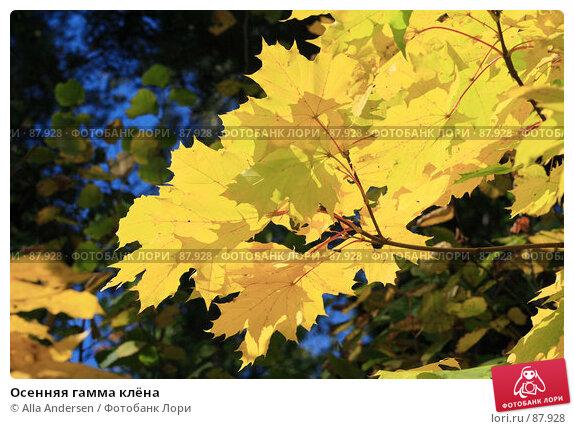 Осенняя гамма клёна, фото № 87928, снято 24 сентября 2007 г. (c) Alla Andersen / Фотобанк Лори
