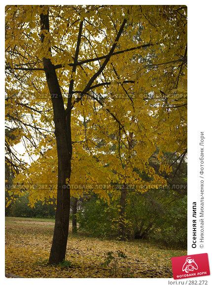 Осенняя липа, фото № 282272, снято 7 октября 2007 г. (c) Николай Михальченко / Фотобанк Лори
