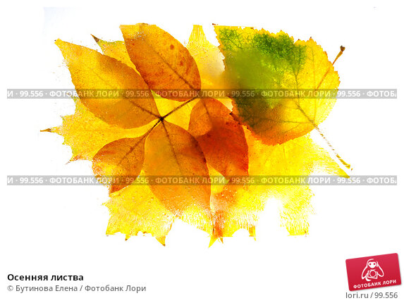 Осенняя листва, фото № 99556, снято 8 октября 2007 г. (c) Бутинова Елена / Фотобанк Лори