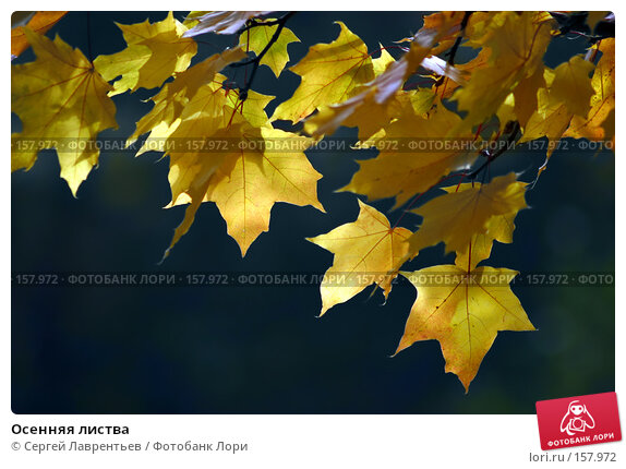 Осенняя листва, фото № 157972, снято 30 сентября 2005 г. (c) Сергей Лаврентьев / Фотобанк Лори