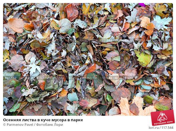 Осенняя листва в куче мусора в парке, фото № 117544, снято 13 ноября 2007 г. (c) Parmenov Pavel / Фотобанк Лори
