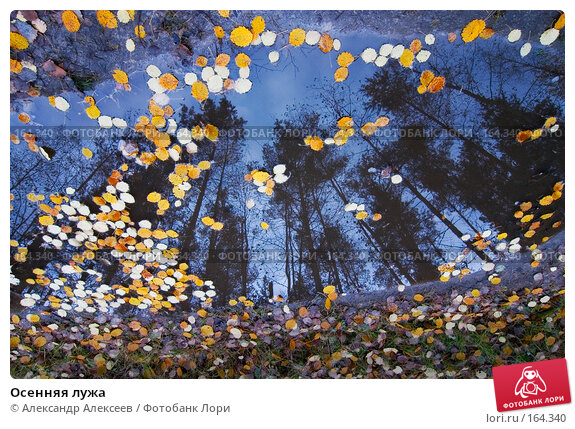 Осенняя лужа, эксклюзивное фото № 164340, снято 20 октября 2007 г. (c) Александр Алексеев / Фотобанк Лори