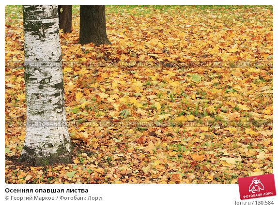 Осенняя опавшая листва, фото № 130584, снято 7 октября 2007 г. (c) Георгий Марков / Фотобанк Лори