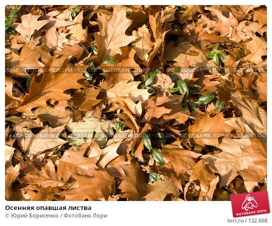 Осенняя опавшая листва, фото № 132668, снято 16 октября 2007 г. (c) Юрий Борисенко / Фотобанк Лори