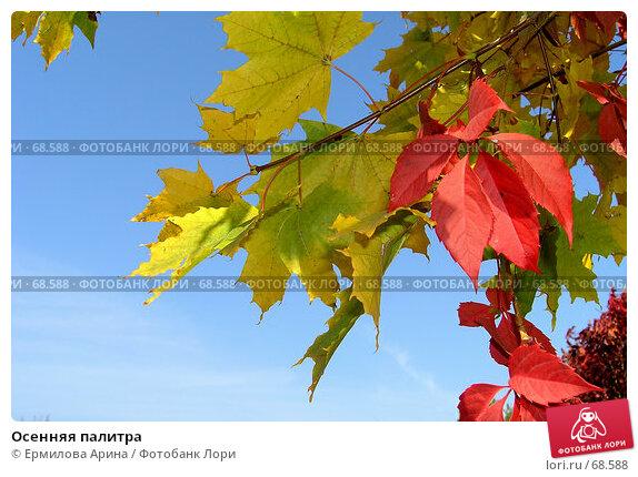 Купить «Осенняя палитра», фото № 68588, снято 4 октября 2005 г. (c) Ермилова Арина / Фотобанк Лори