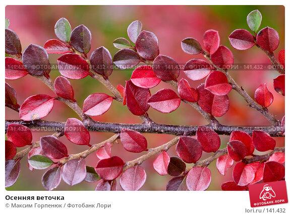 Купить «Осенняя веточка», фото № 141432, снято 28 ноября 2006 г. (c) Максим Горпенюк / Фотобанк Лори