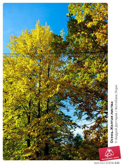 Купить «Осень.Желтая листва», фото № 2014448, снято 26 сентября 2010 г. (c) Андрей Дегтярев / Фотобанк Лори