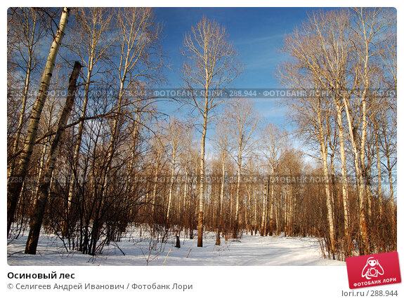 Осиновый лес, фото № 288944, снято 23 марта 2008 г. (c) Селигеев Андрей Иванович / Фотобанк Лори