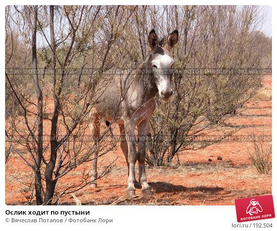 Ослик ходит по пустыни, фото № 192504, снято 15 октября 2006 г. (c) Вячеслав Потапов / Фотобанк Лори
