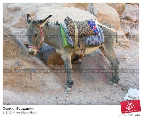 Ослик. Иордания, фото № 128444, снято 25 ноября 2007 г. (c) Екатерина Овсянникова / Фотобанк Лори