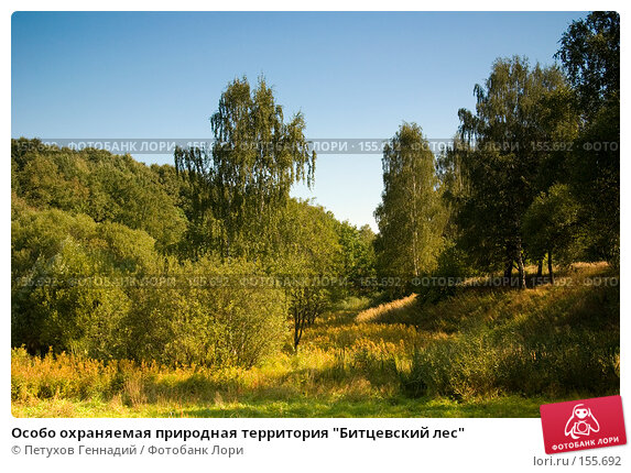 "Особо охраняемая природная территория ""Битцевский лес"", фото № 155692, снято 4 сентября 2007 г. (c) Петухов Геннадий / Фотобанк Лори"