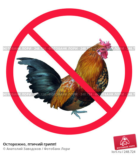 Осторожно, птичий грипп!, фото № 248724, снято 30 марта 2017 г. (c) Анатолий Заводсков / Фотобанк Лори