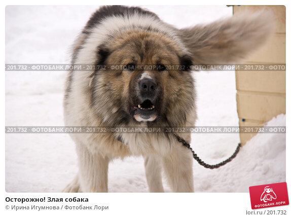 Купить «Осторожно! Злая собака», фото № 201732, снято 2 февраля 2008 г. (c) Ирина Игумнова / Фотобанк Лори
